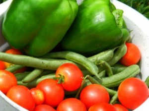 zelenina vhodná na nakladanie v kyslom náleve