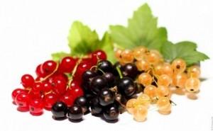 Na ríbezľový kompót  môžeme použiť všetky tri farebné odrody plodov.