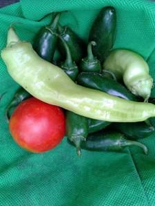 paradajka a chilly